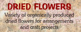 Organic Dried flowers for sale